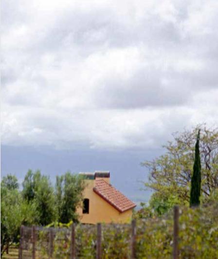 CALASA OLIVE FARM